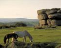 Celtic Tours - Dartmoor National Park